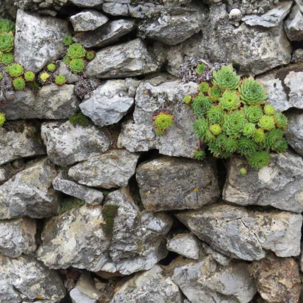Suhozidan zid